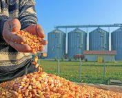 Grain Contracts
